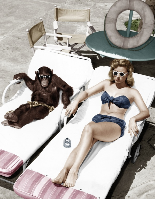 Lady and the Chimp