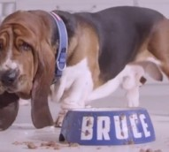 KCA pits paper towel against Bruce the Basset Hound in new brand platform for Viva
