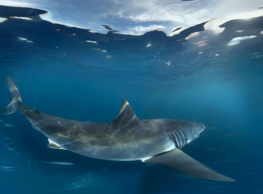 Samsung demos new virtual reality technology with 360-degree great white shark experience