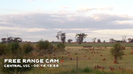 Free range eggs brand takes transparency to another level with real-time video