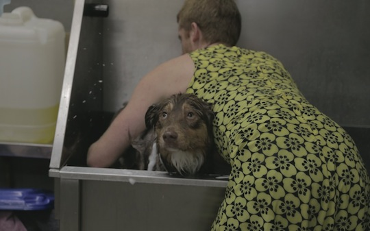 person washing dog