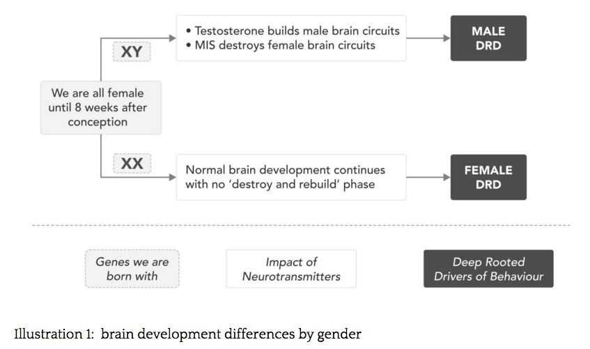 brain development by gender