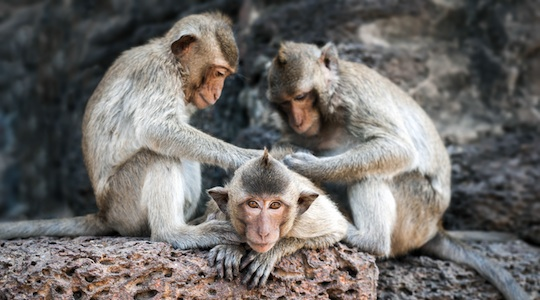 Mirror neurons and the science of influence