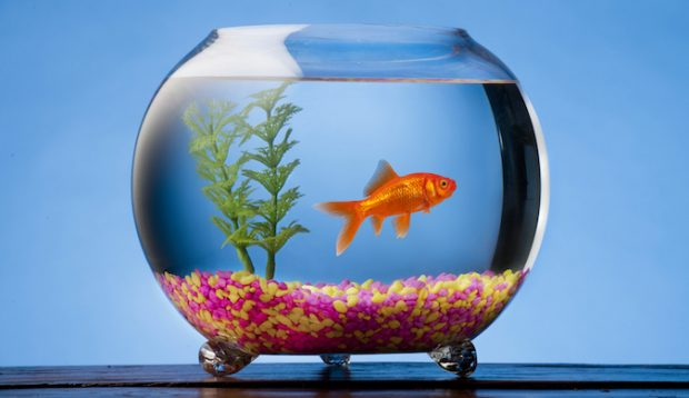 How storytelling can relieve the goldfish factor