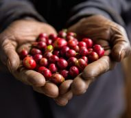 Starbucks makes a venti commitment to sustainable coffee traceability tech