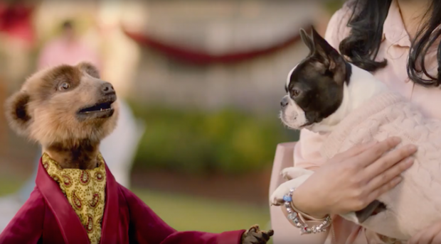 Chief meerkating officer talks latest campaign and new brand philosophy