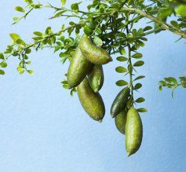 Cultural awareness and reflection through food
