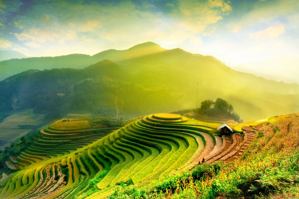 Shutterstock Green rice fields