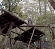 Episode four of the 'Brand Summit Road Trip': Port Macquarie Koala Hospital